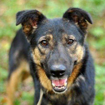 Макса - Собаки в добрые руки