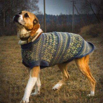 Сэлди - Собаки в добрые руки