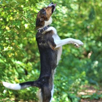 Лаффи - Собаки в добрые руки