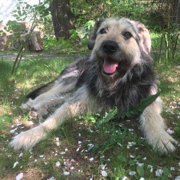 Герцог-Гоша - Найденные собаки