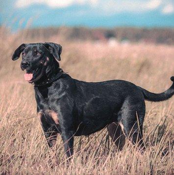 Аграфена - Собаки в добрые руки