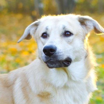 Вениамин - Собаки в добрые руки