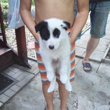 Бим - Найденные собаки