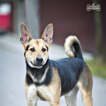Франт - Собаки в добрые руки