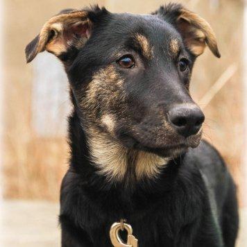 Любань - Собаки в добрые руки