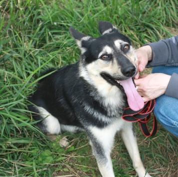 Енисей - Собаки в добрые руки