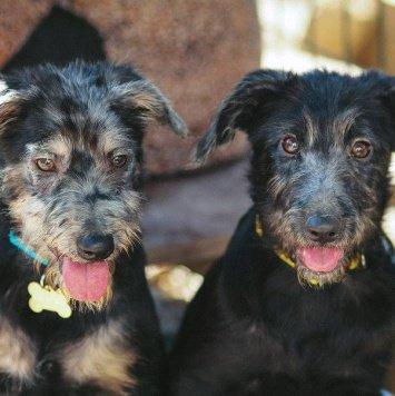 Кит и Кэсси - Собаки в добрые руки