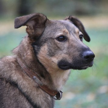Дакар - Собаки в добрые руки