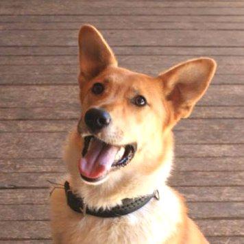Даминика - Собаки в добрые руки