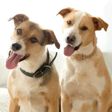 Фил и Ластик - Собаки в добрые руки