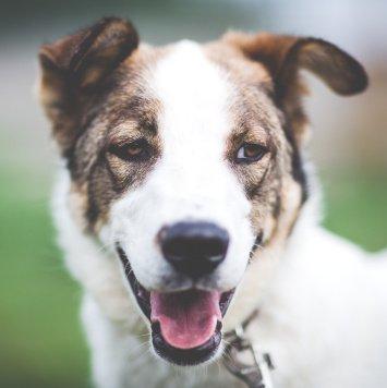 Дар - Собаки в добрые руки