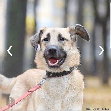 Муша - Собаки в добрые руки