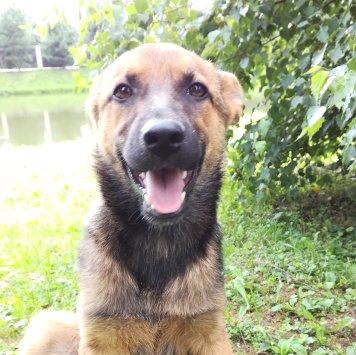 Роса - Найденные собаки