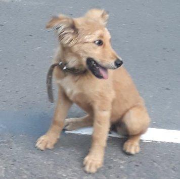 Лисичка - Найденные собаки