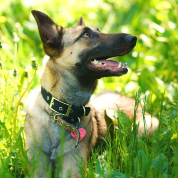 Ласка - Собаки в добрые руки