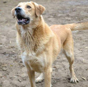 Дымок - Собаки в добрые руки