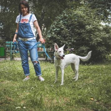 Тори - Одуванчик - Собаки в добрые руки
