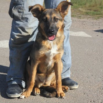 Келли - Собаки в добрые руки
