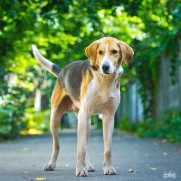 Олимп - Собаки в добрые руки