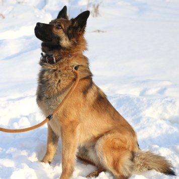 Лютик - Собаки в добрые руки