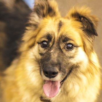 Собака мечта Лиза - Собаки в добрые руки