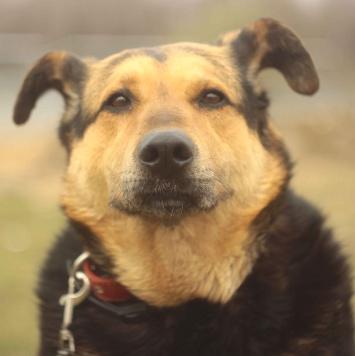 Анги - Собаки в добрые руки