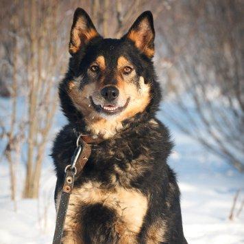 Макс Буран - Собаки в добрые руки