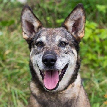 Ясфира - Собаки в добрые руки