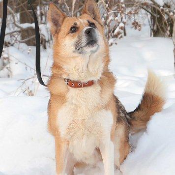 Аполло - Собаки в добрые руки