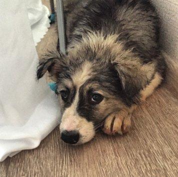 Малышка - Найденные собаки