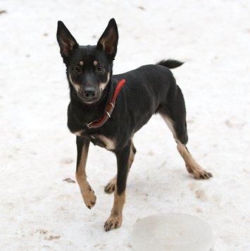 Маняша - Собаки в добрые руки