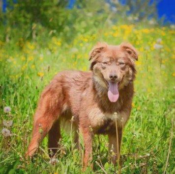 Линдор - Собаки в добрые руки