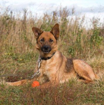 Чилита - Собаки в добрые руки
