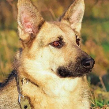 Аникей - Собаки в добрые руки