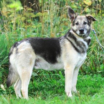Демьян - Собаки в добрые руки