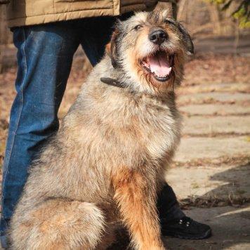 Чингиз - Собаки в добрые руки