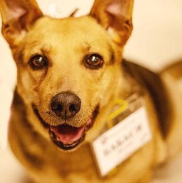 Бабася - Собаки в добрые руки