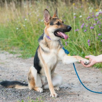 Джинджер - Собаки в добрые руки