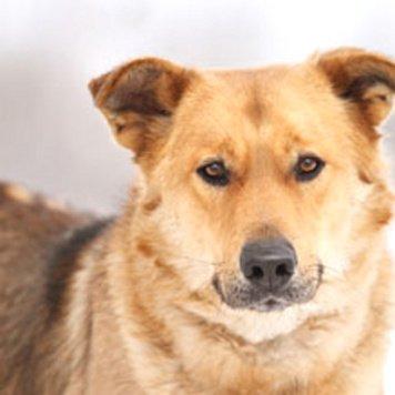 Техас - Собаки в добрые руки