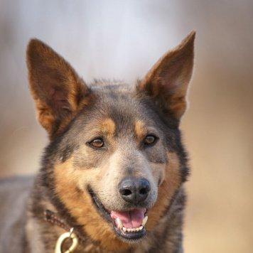 Кольт - Собаки в добрые руки