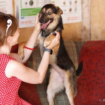 Берри - Собаки в добрые руки