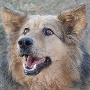 Москва - Собаки в добрые руки
