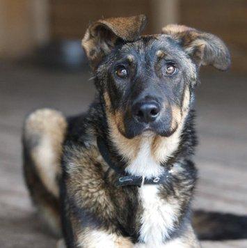 Тиль - Собаки в добрые руки