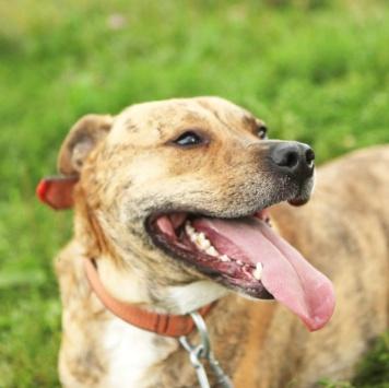 Ямир - Собаки в добрые руки