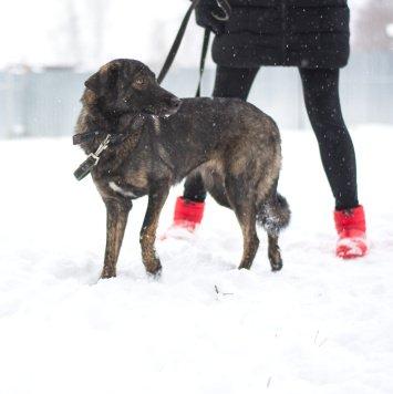 Мася - Собаки в добрые руки