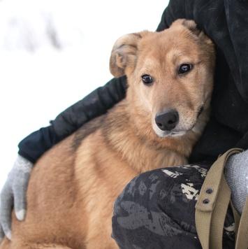 Викки - Собаки в добрые руки
