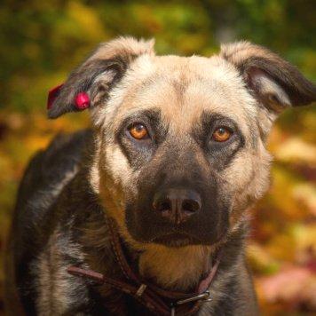 Вера - Собаки в добрые руки