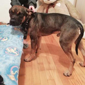 Вася - Собаки в добрые руки