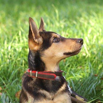 Ося - Найденные собаки