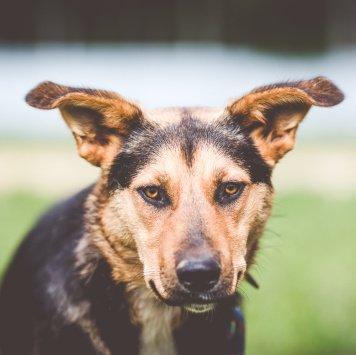 Кристи - Собаки в добрые руки
